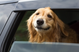 stresové situace u psů