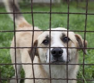 V útulcích je přes 11 000 zvířat2